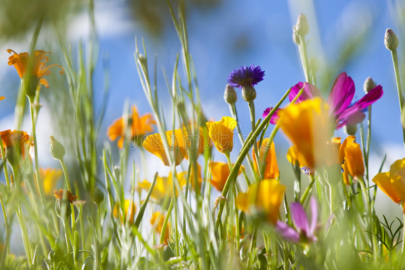 Flores selvagens da mola imagem de stock royalty free