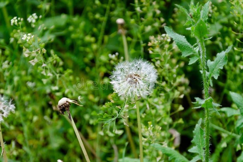 Flores selvagens de floresc?ncia em uma grama verde imagem de stock