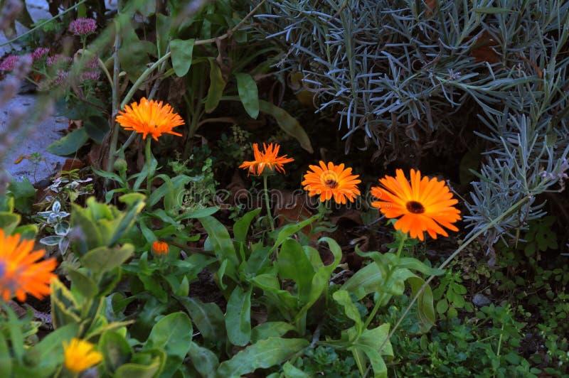 Flores selvagens de Ontário em Copenhaga Dinamarca imagens de stock royalty free