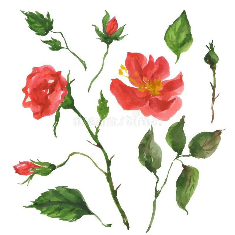 Flores selvagens de Rosa ilustração stock