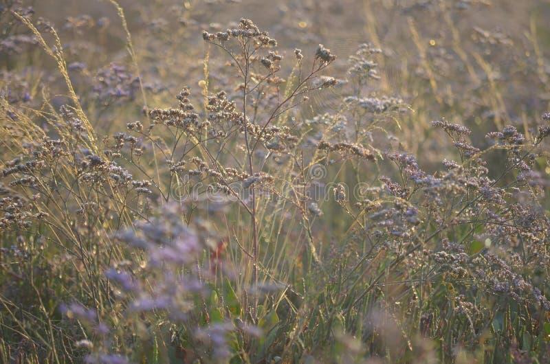 Flores selvagens do prado na luz solar imagem de stock
