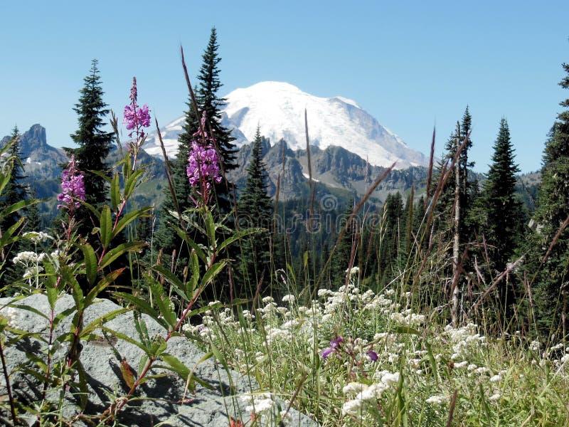 Flores Selvagens e Mt Rainier imagem de stock