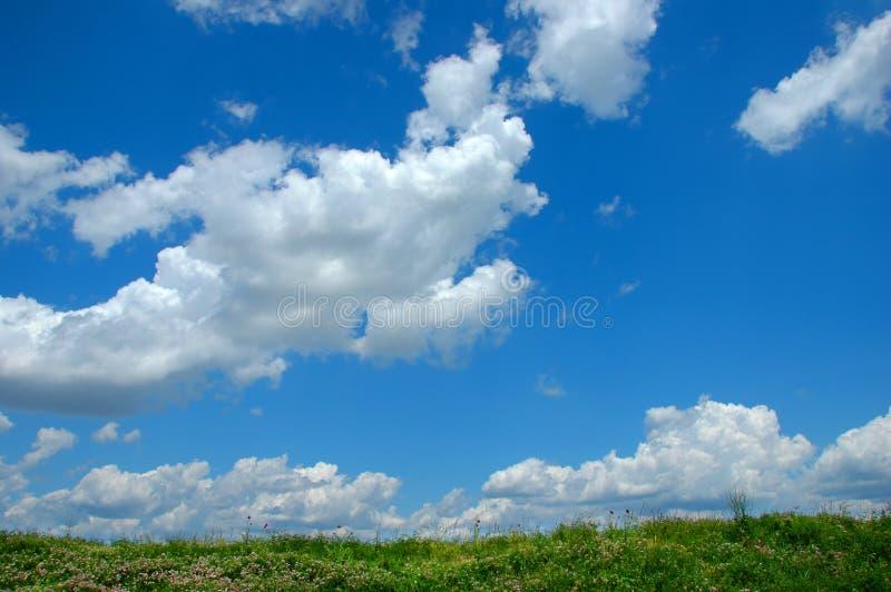 Flores selvagens e nuvens imagens de stock