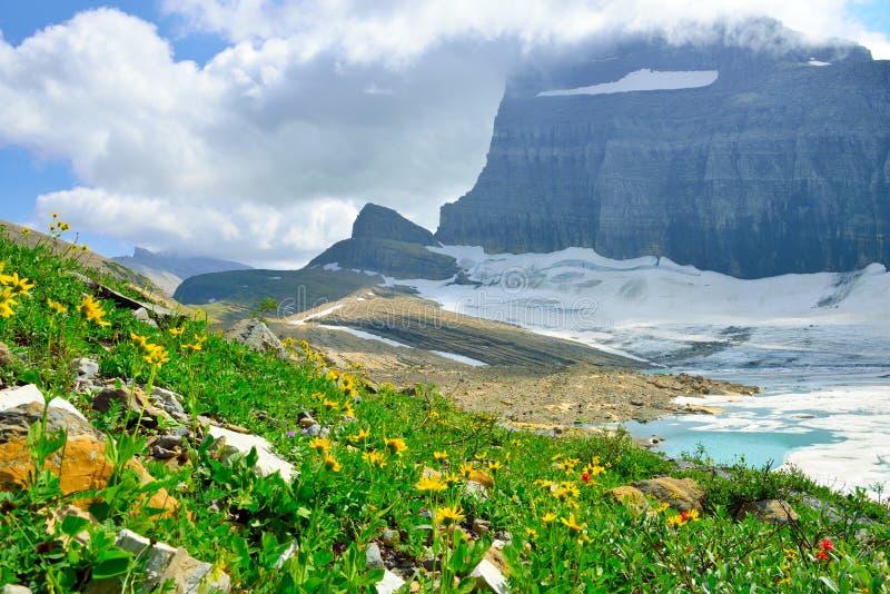 Flores selvagens e nuvens pela geleira em muitas geleiras, parque nacional de Grinnell de geleira, Montana fotografia de stock royalty free