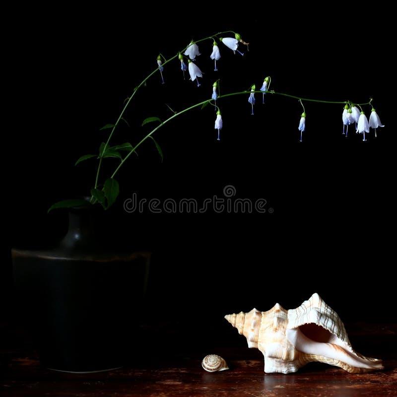Flores selvagens e shell do mar imagens de stock