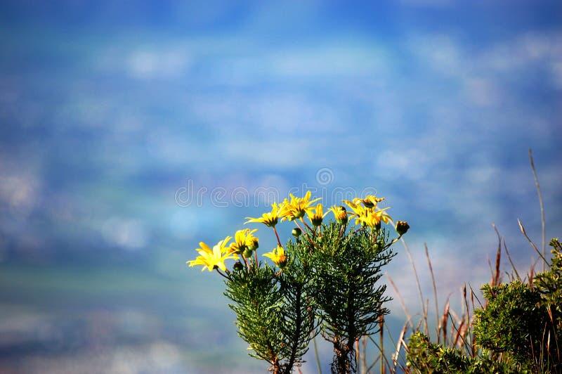 Flores selvagens em Cape Town, África do Sul imagem de stock royalty free