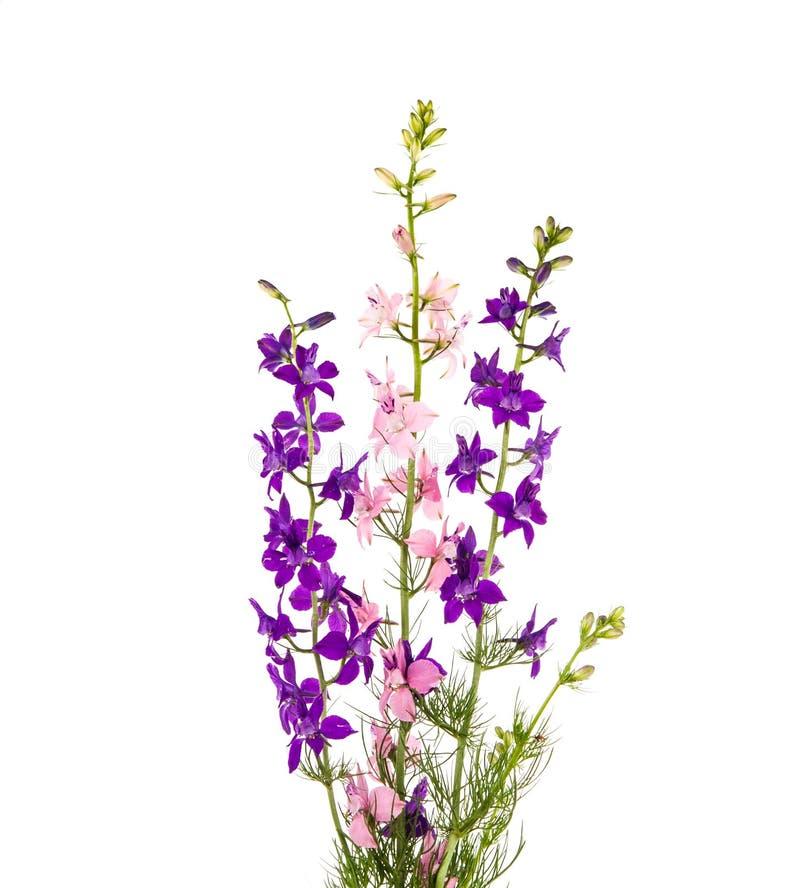 Download Flores selvagens isoladas foto de stock. Imagem de bouquet - 29834142