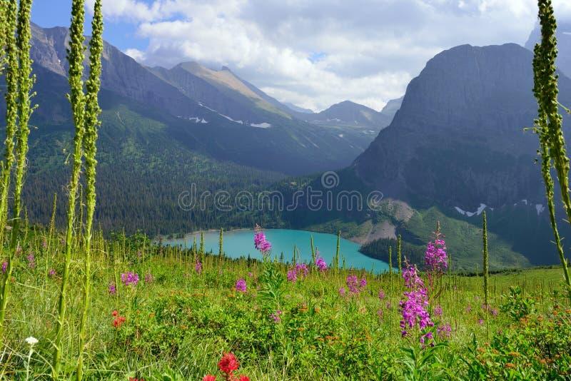 Flores selvagens na fuga à geleira de Grinnell e no lago no parque nacional de geleira foto de stock
