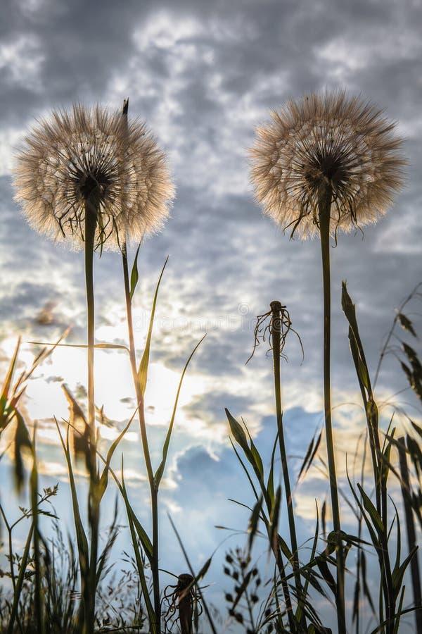 Flores selvagens no céu azul imagem de stock