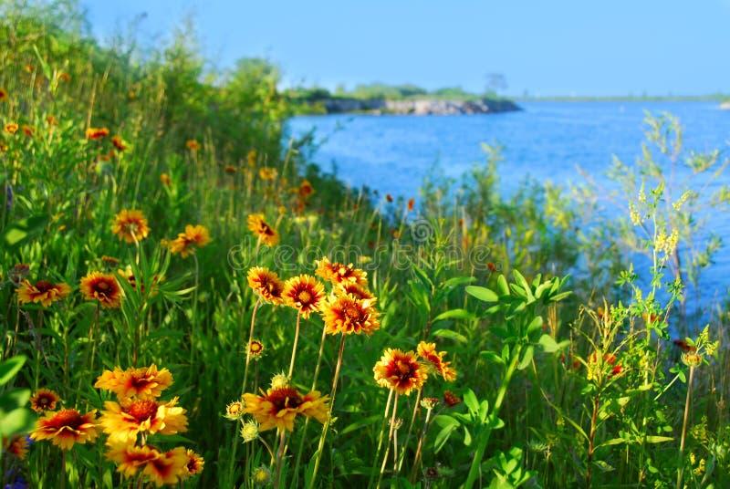 Flores selvagens no seashore fotos de stock royalty free