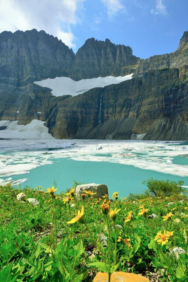 Flores selvagens pela geleira em muitas geleiras, parque nacional de Grinnell de geleira, Montana imagens de stock royalty free