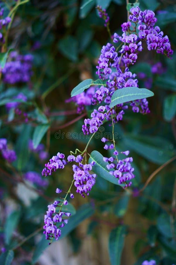 Flores selvagens pequenas fotos de stock royalty free