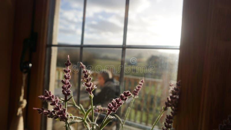 Flores selvagens representadas em uma casa na árvore no coração do campo inglês foto de stock