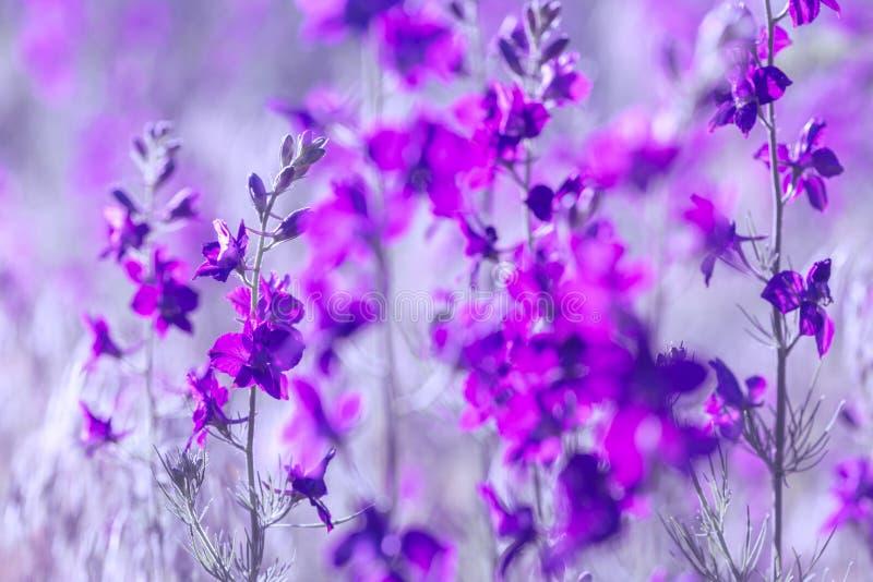 Flores selvagens roxas fotografia de stock