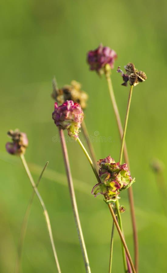 Download Flores Selvagens Verdes E Roxas Foto de Stock - Imagem de mola, florescer: 107526150