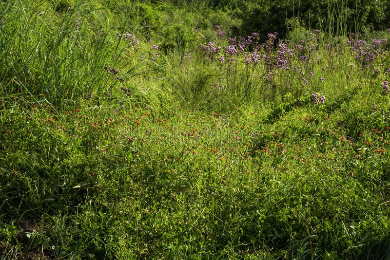 Flores silvestres de diferentes colores, algunas malezas, haciendo un tapiz de la naturaleza imágenes de archivo libres de regalías