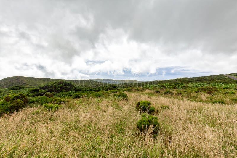 Flores Skotska högländerna arkivbilder