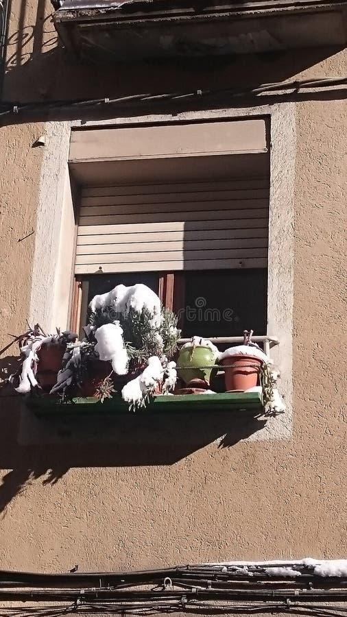 Flores Snowcapped em uma janela regular imagem de stock royalty free