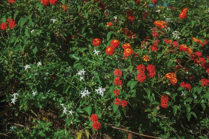 Flores sobre un arbusto frondoso verde en una granja fotografía de archivo