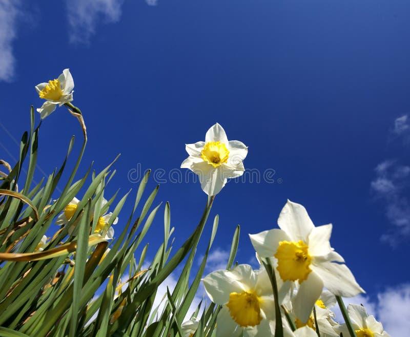 Flores. spring.sky imagens de stock