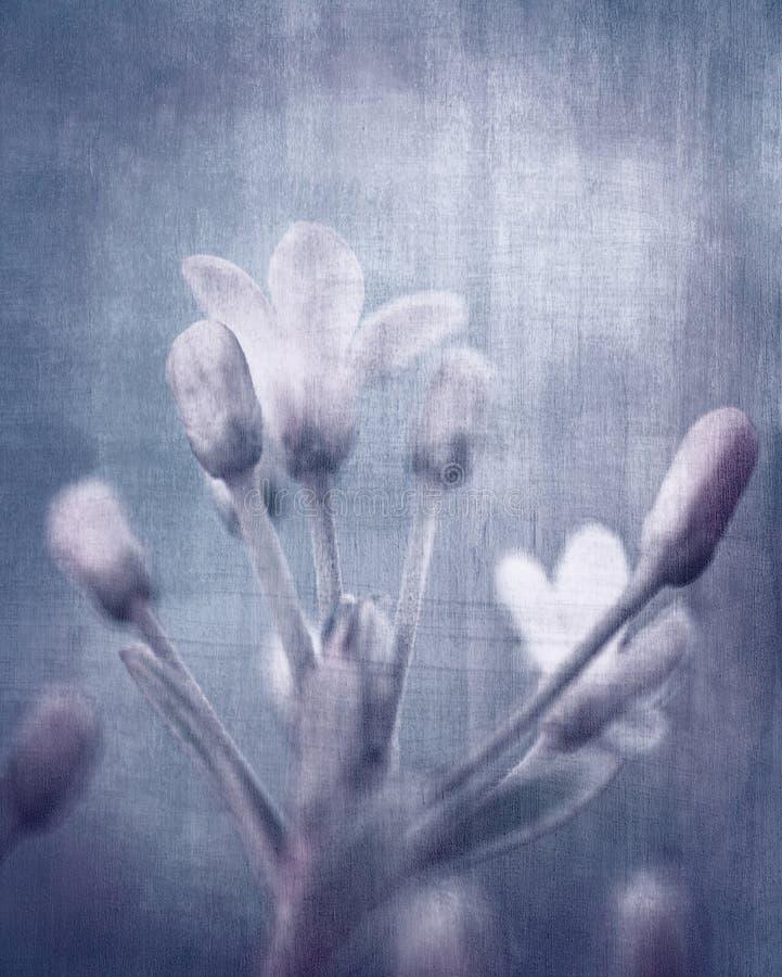 Flores sucias imagen de archivo libre de regalías