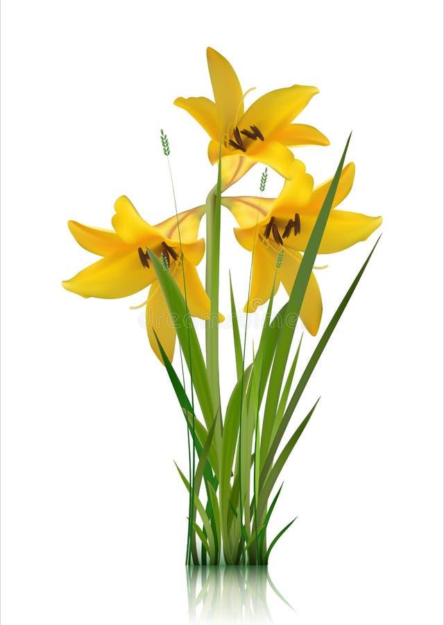 Flores tempranas del bosque y del jardín de la primavera aisladas en el sistema blanco del vector Ejemplo de la primavera y del v imagenes de archivo