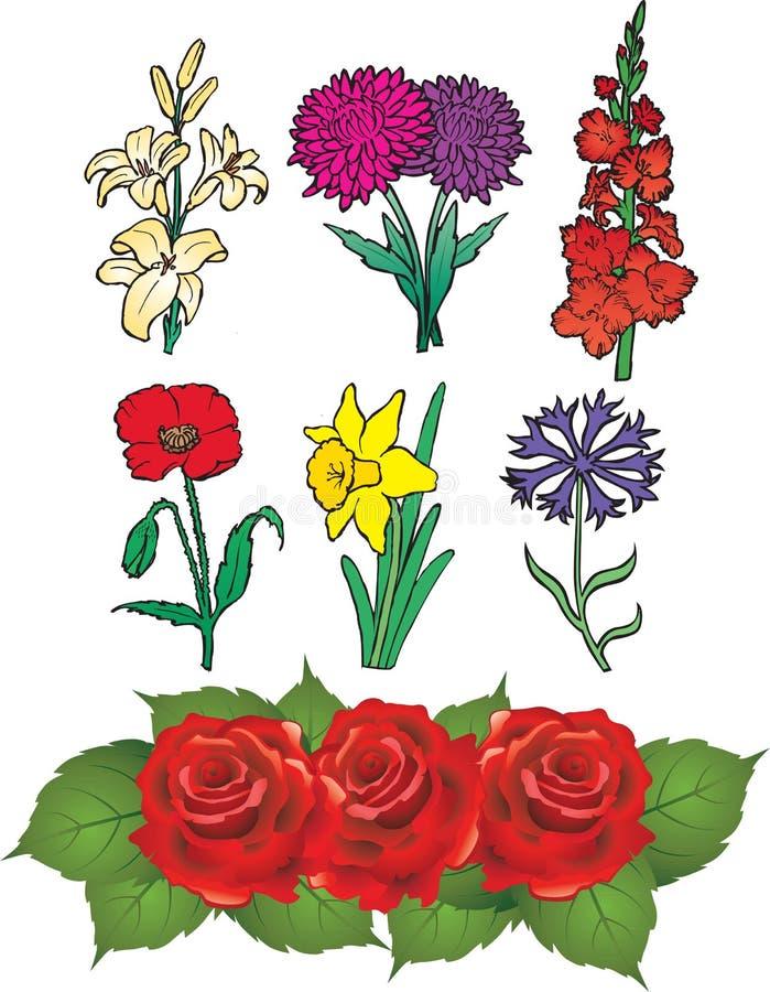 Flores - tipo de flor, daffodil, cor-de-rosa, lírio, cornfl ilustração royalty free