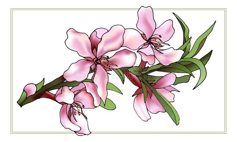 Flores tiradas da cor vetor cor-de-rosa delicado ilustração do vetor