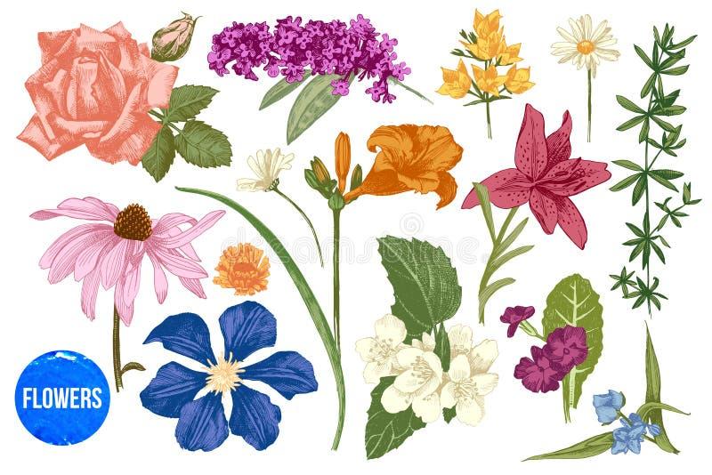 Flores tiradas mão do jardim ajustadas ilustração do vetor