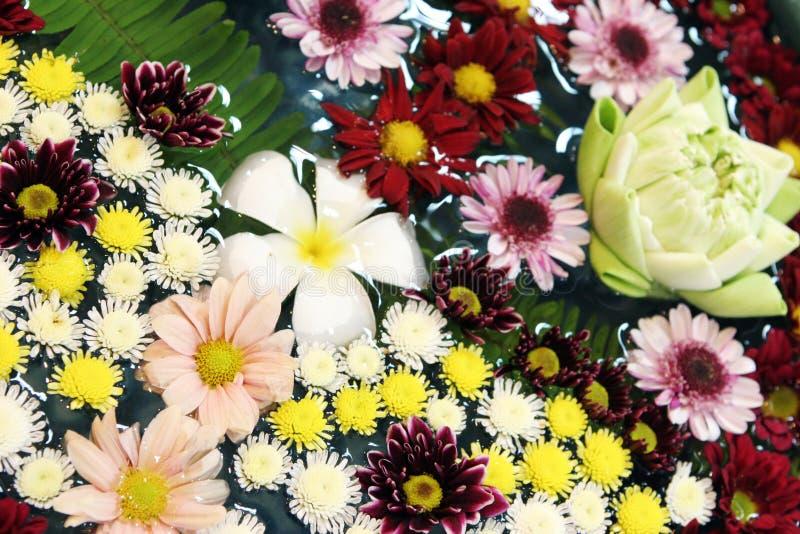 Flores tropicais imagens de stock