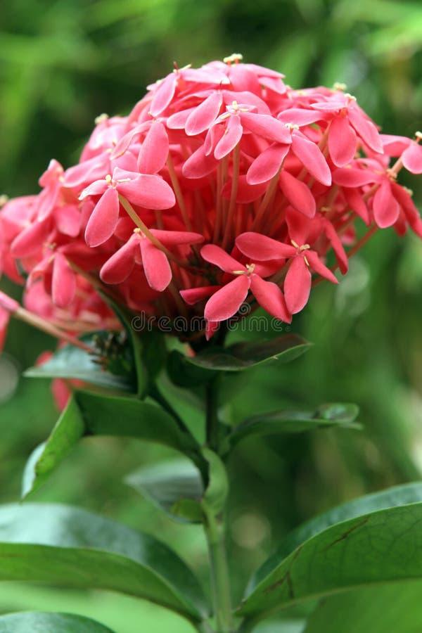 Flores tropicais bonitas imagens de stock royalty free