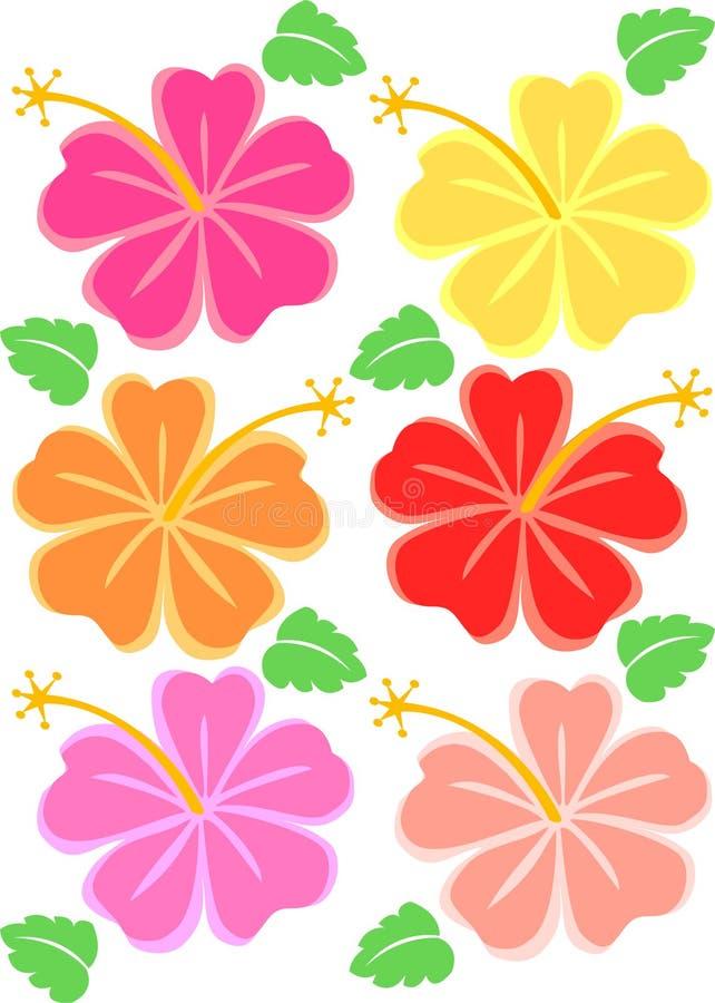Flores tropicais do hibiscus ilustração stock