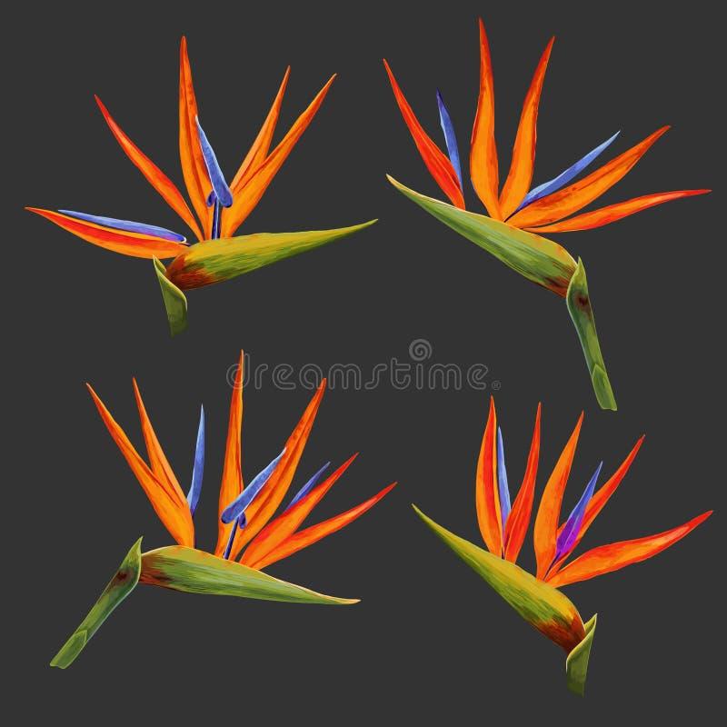 Flores tropicais e folhas ajustadas Coleção floral exótica Projeto botânico para o fundo, tela, convite do casamento ilustração do vetor