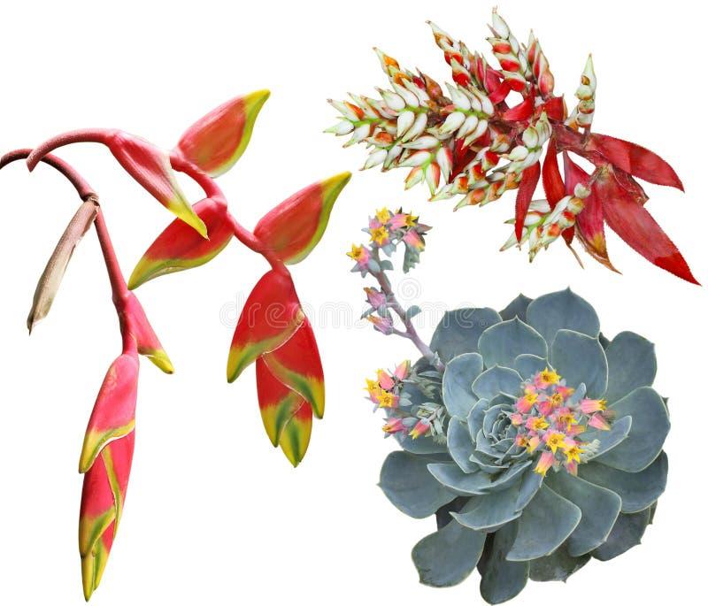 Flores tropicais exóticas foto de stock royalty free