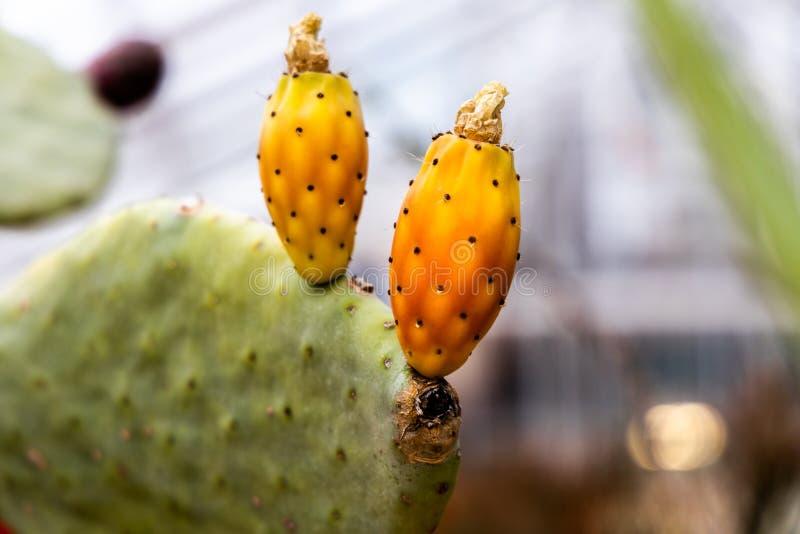 Flores tropicais exóticas e close-up das plantas imagem de stock royalty free