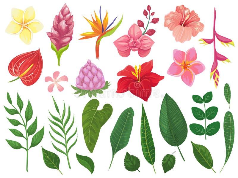 Flores tropicais Os trópicos florescem as folhas, a folha do verão no ramo e o grupo tropico da ilustração do vetor das folhas da ilustração stock