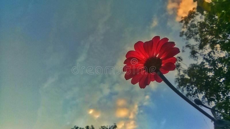 Flores tropicales imagen de archivo