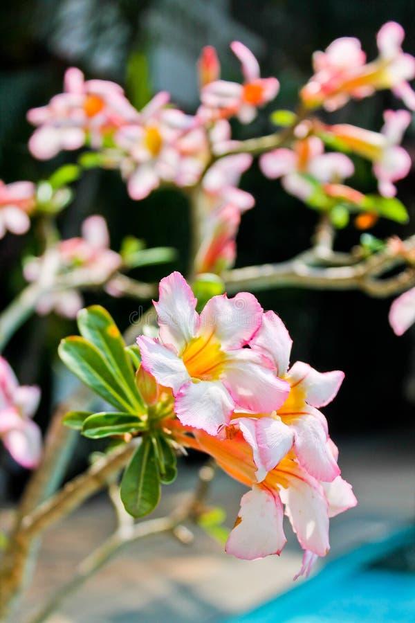 Flores tropicales imagenes de archivo