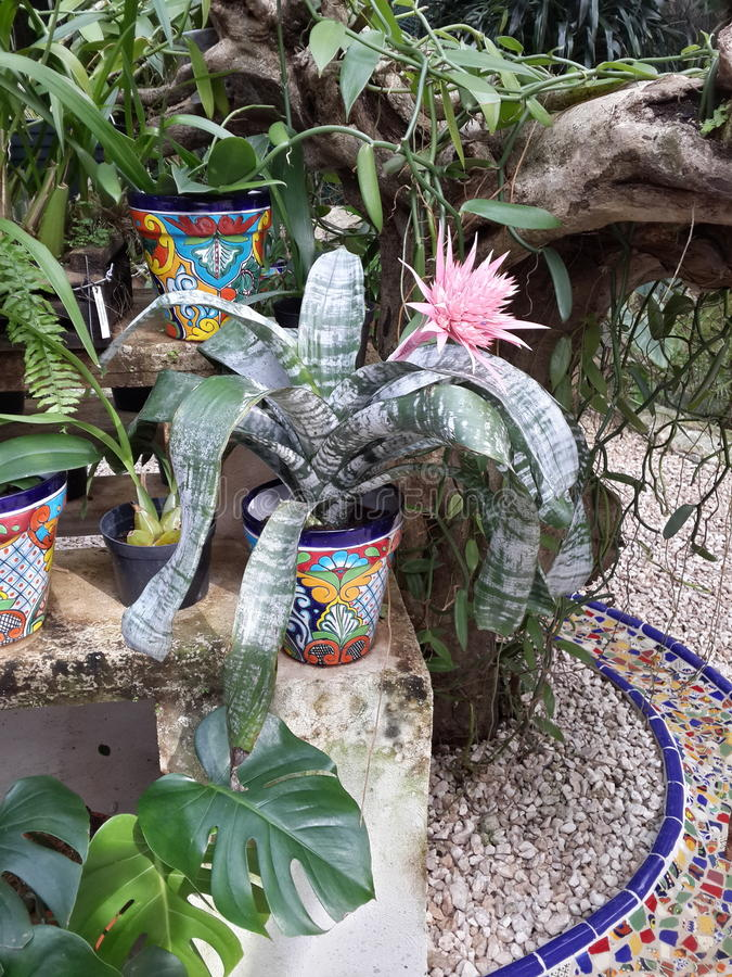 Flores tropicales royaltyfri bild