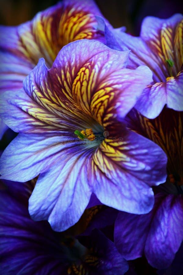 Flores tropicales amarillas púrpuras imagen de archivo libre de regalías