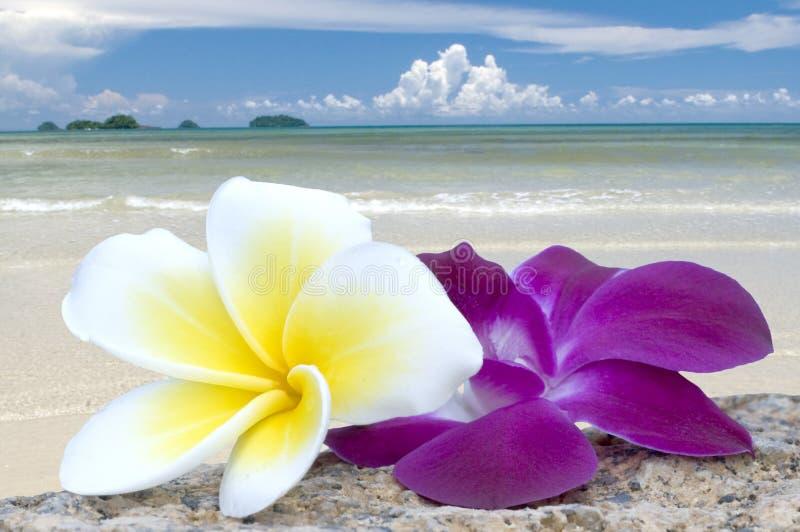 Flores tropicales en la playa. fotografía de archivo libre de regalías