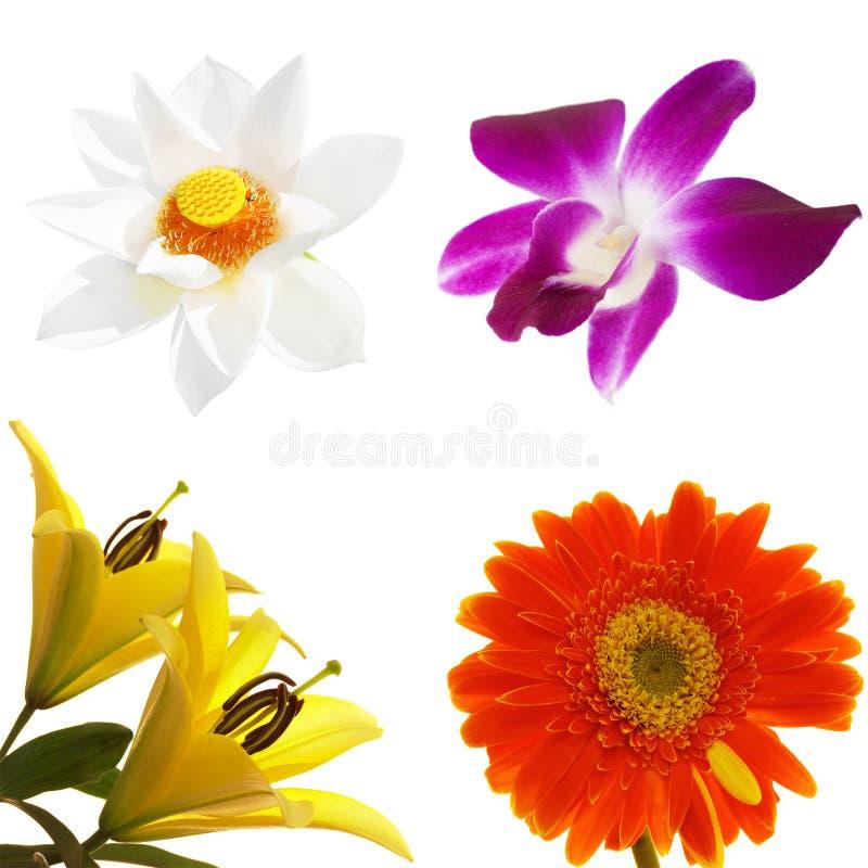 Flores tropicales fijadas fotografía de archivo