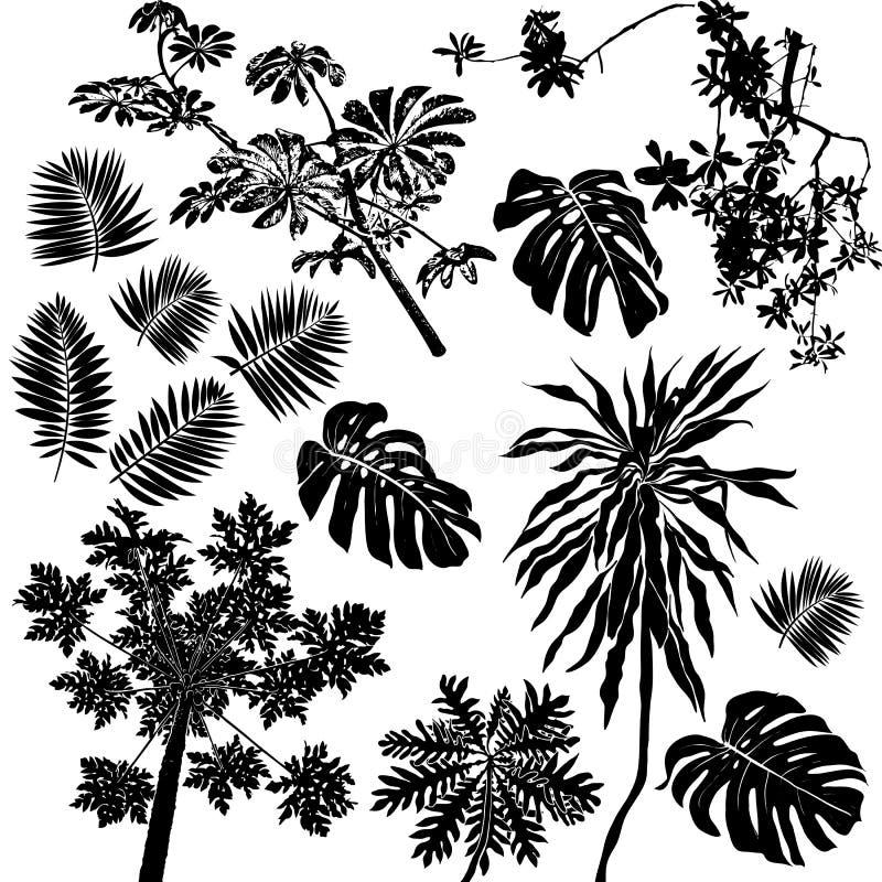 Flores tropicales y plantas fijadas stock de ilustración