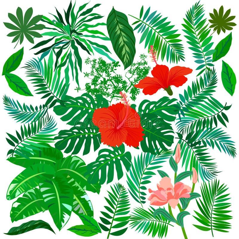 Flores tropicales y plantas fijadas libre illustration