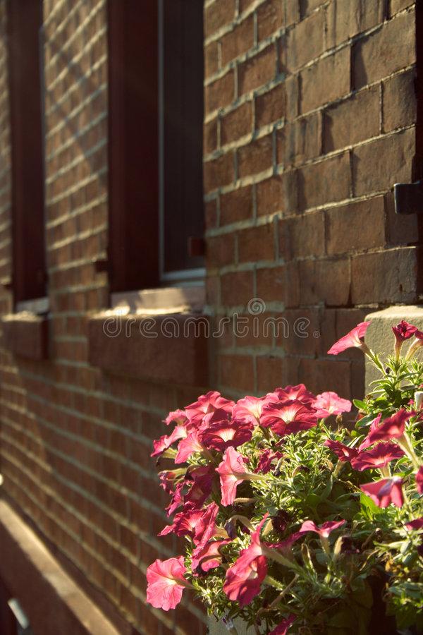 Flores urbanas fotos de archivo