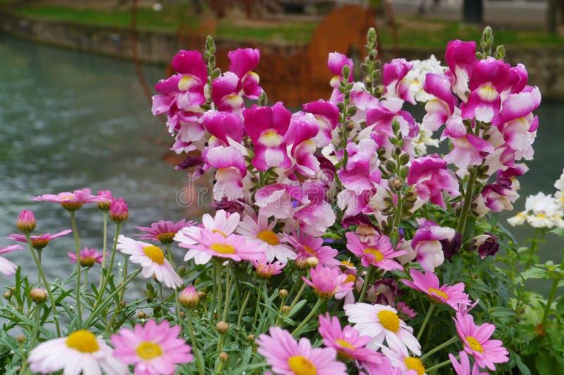 Flores urbanas coloridas fotografia de stock royalty free