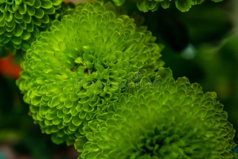 Flores verdes bonitas com lotes das pétalas fotos de stock royalty free