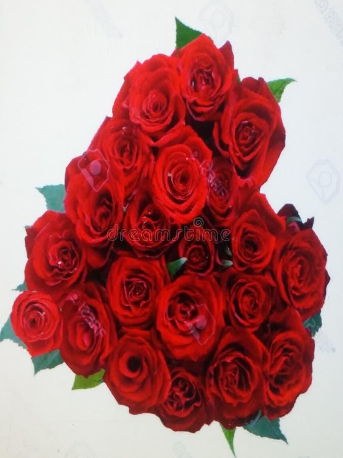 Flores vermelhas fotografia de stock royalty free