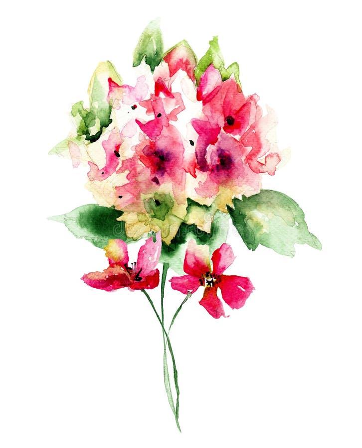 Flores vermelhas bonitas da hortênsia ilustração do vetor