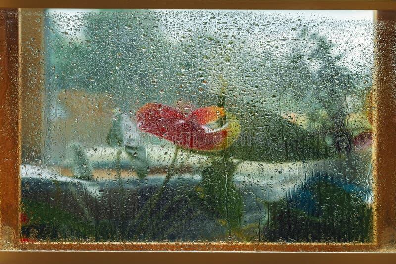 Flores vermelhas borradas em um quadro de janela de madeira, vidro de janela molhado, pingos de chuva Imagem natural, pintura da  imagens de stock